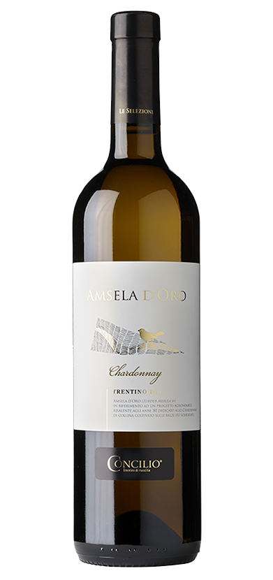 Chardonnay Amsela d&rsquo;oro (Turdus Merula sp.)&nbsp;<br />